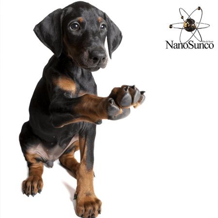 محافظ مخصوص پای سگ